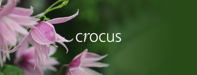 Crocus Promotion Codes 2018