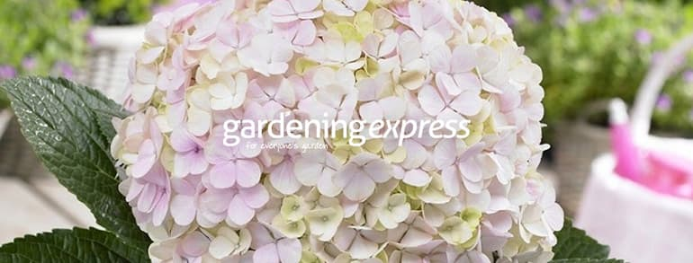 Gardening Express Voucher Codes 2021