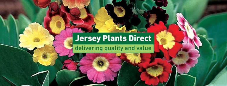 Jersey Plants Direct Discount Codes 2018