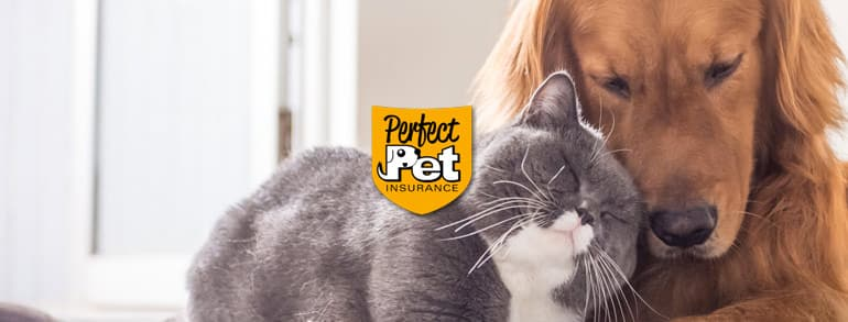Perfect Pet Insurance Discount Codes 2020