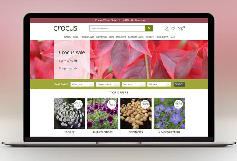 crocus plants