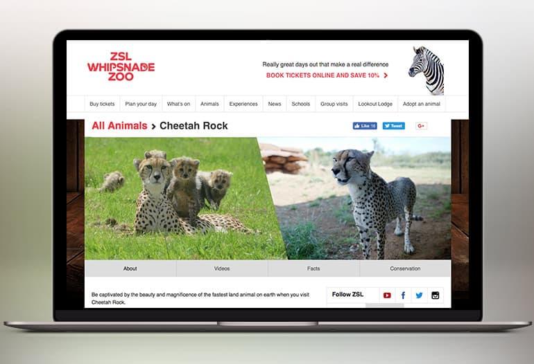 whipsnade zoo cheeta rock